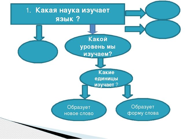1. Какая наука изучает язык ? Какой уровень мы изучаем? Какие единицы изучает...