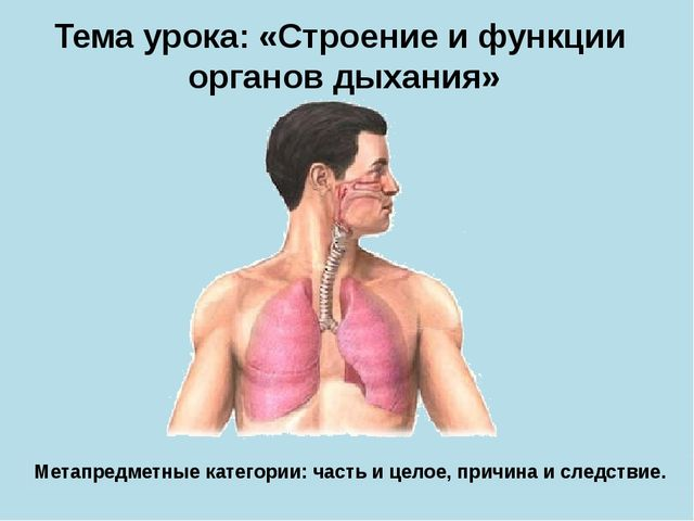 Тема урока: «Строение и функции органов дыхания» Метапредметные категории: ча...