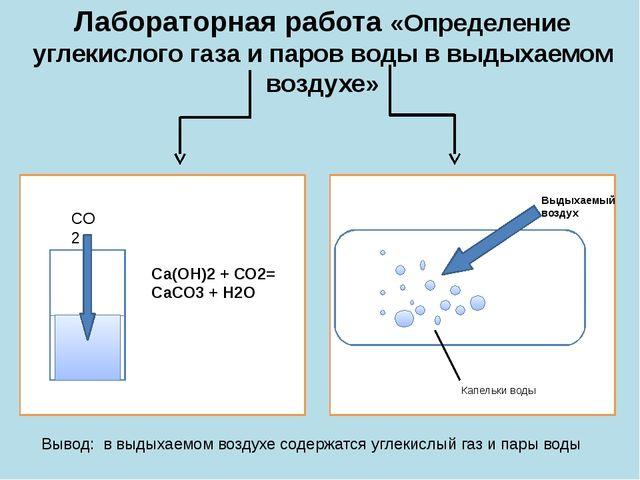 Лабораторная работа «Определение углекислого газа и паров воды в выдыхаемом в...