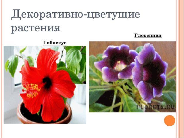 Декоративно-цветущие растения Гибискус Глоксиния