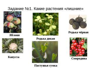 Задание №1. Какие растения «лишние» Редька чёрная Яблоня Капуста Смородина Ре