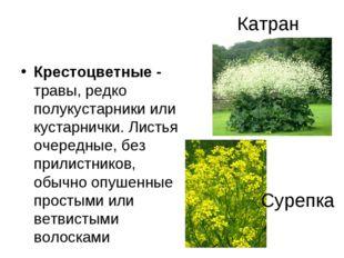 Катран Крестоцветные - травы, редко полукустарники или кустарнички. Листья оч