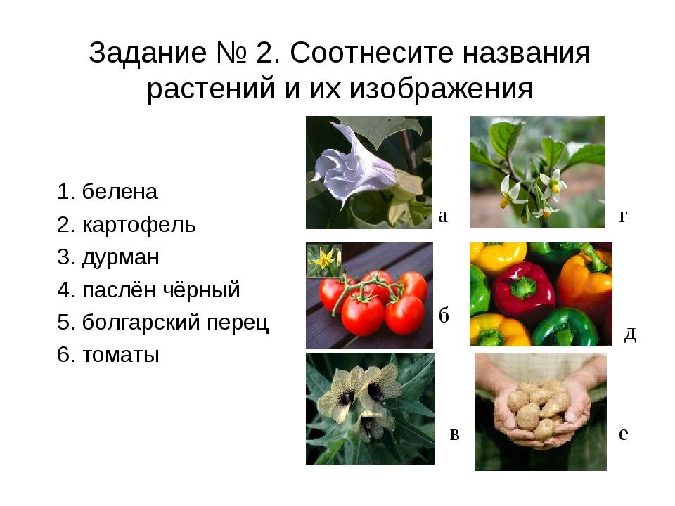 Задание № 2. Соотнесите названия растений и их изображения 1. белена 2. карто...