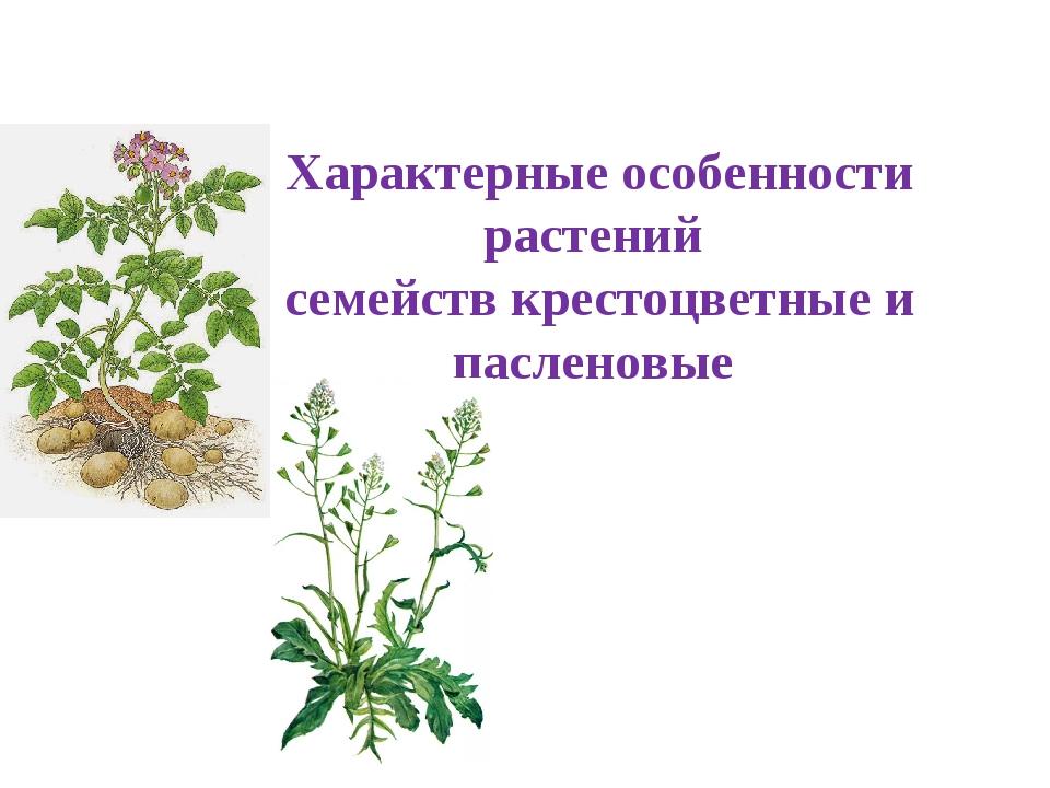 Характерные особенности растений семейств крестоцветные и пасленовые