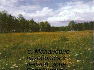 с. Маландино находится в лесной зоне Барабинской низменности, южнее города Б