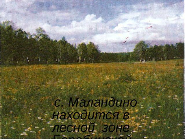 с. Маландино находится в лесной зоне Барабинской низменности, южнее города Б...