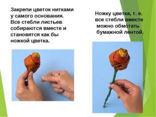 Закрепи цветок нитками у самого основания. Все стебли листьев собираются вмес