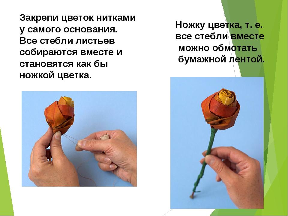 Закрепи цветок нитками у самого основания. Все стебли листьев собираются вмес...