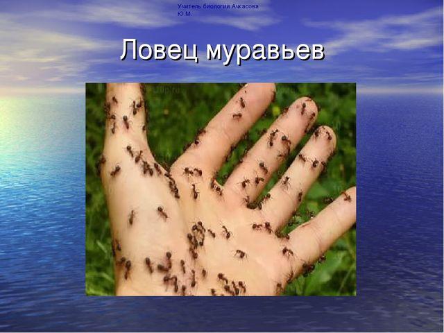 Ловец муравьев Учитель биологии Ачкасова Ю.М.