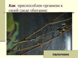 Как приспособлен организм к своей среде обитания: палочник
