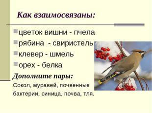 Как взаимосвязаны: цветок вишни - пчела рябина - свиристель клевер - шмель ор