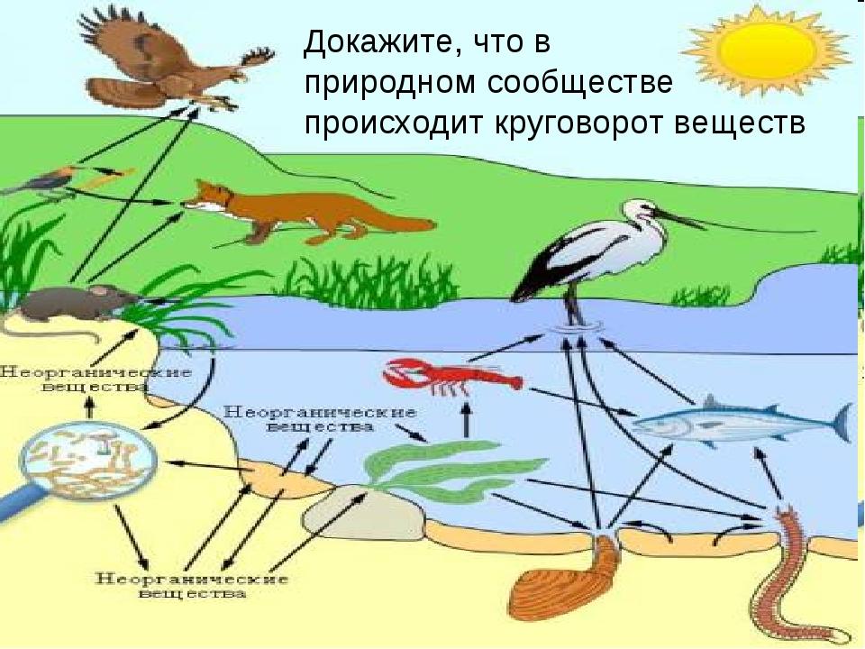 Докажите, что в природном сообществе происходит круговорот веществ