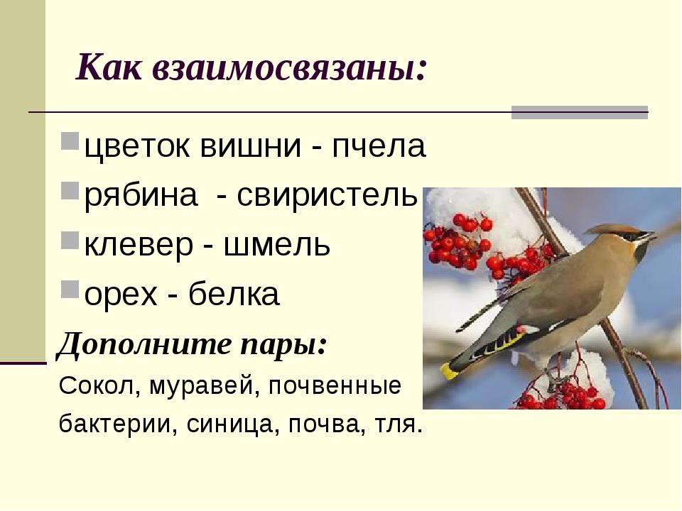 Как взаимосвязаны: цветок вишни - пчела рябина - свиристель клевер - шмель ор...