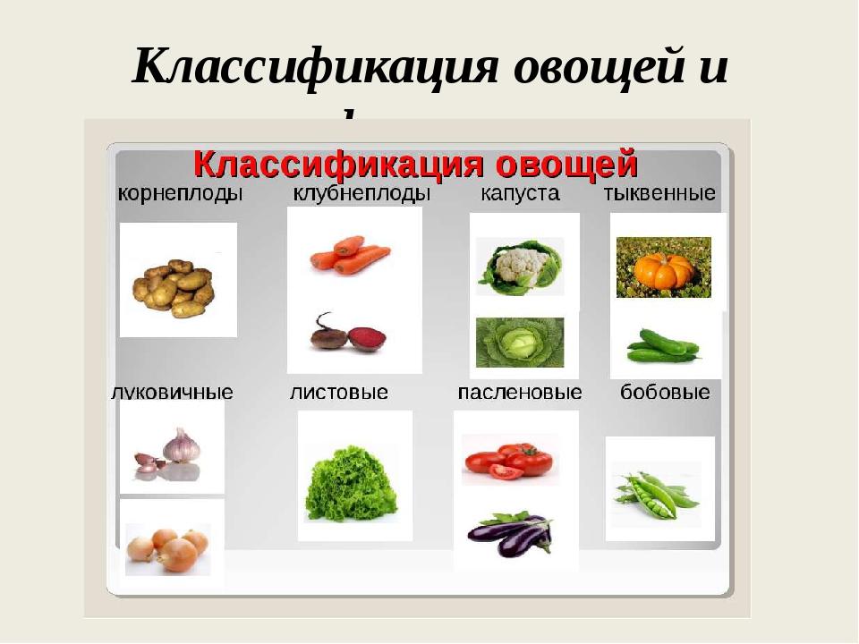 Классификация овощей и фруктов