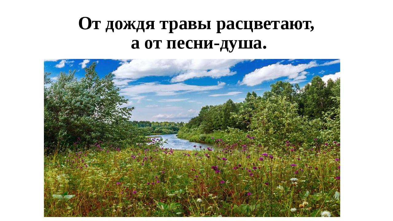 От дождя травы расцветают, а от песни-душа.