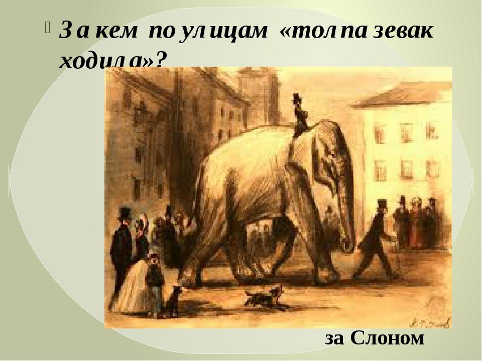 За кем по улицам «толпа зевак ходила»? за Слоном