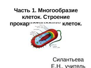 Часть 1. Многообразие клеток. Строение прокариотических клеток. Силантьева Е.