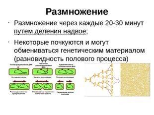 Размножение Размножение через каждые 20-30 минут путем деления надвое; Некото
