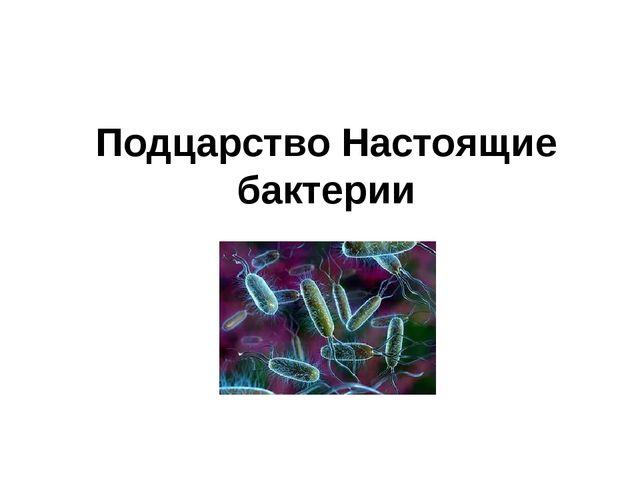 Подцарство Настоящие бактерии