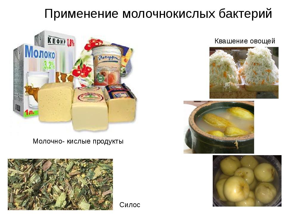 Применение молочнокислых бактерий Силос Квашение овощей Молочно- кислые проду...