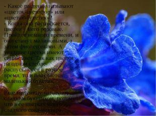 - Какое растение называют «цветок-светофор» или «цветок-букетик»? - Когда он
