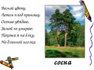 Весной цвету, Летом плод приношу, Осенью увядаю, Зимой не умираю. Похожа я на