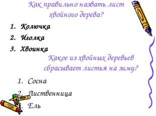 Как правильно назвать лист хвойного дерева? Колючка Иголка Хвоинка Какое из х