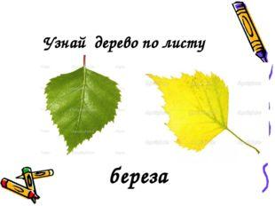 Узнай дерево по листу береза