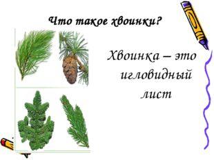 Что такое хвоинки? Хвоинка – это игловидный лист