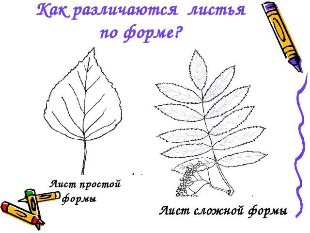 Как различаются листья по форме? Лист простой формы Лист сложной формы