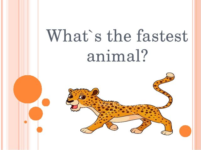 What`s the fastest animal?