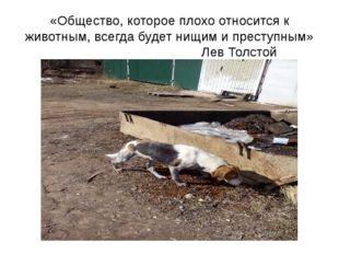 «Общество, которое плохо относится к животным, всегда будет нищим и преступны