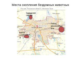 Места скопления бездомных животных Городская свалка Район хлебозавода Район м