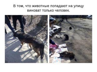 В том, что животные попадают на улицу виноват только человек.
