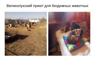 Великолукский приют для бездомных животных