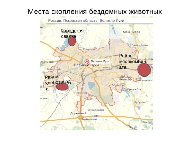 Места скопления бездомных животных Городская свалка Район хлебозавода Район м...