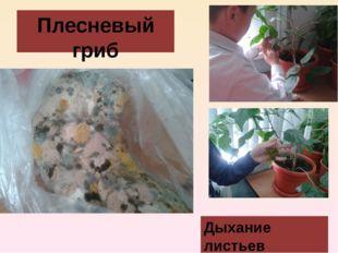Плесневый гриб Дыхание листьев
