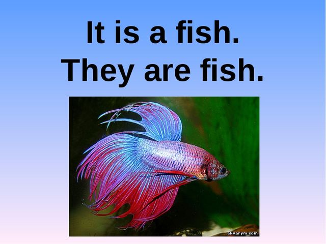 It is a fish. They are fish.