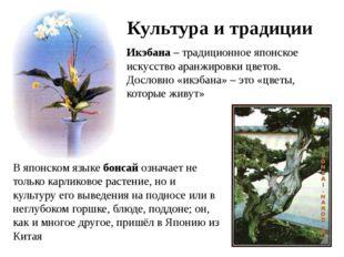 Культура и традиции Икэбана – традиционное японское искусство аранжировки цве