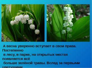 А весна уверенно вступает в свои права. Постепенно в лесу, в парке, на откры