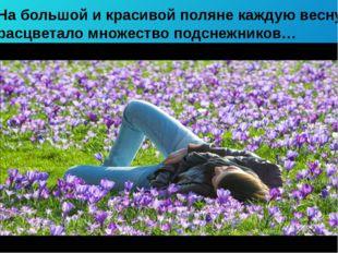 На большой и красивой поляне каждую весну расцветало множество подснежников…