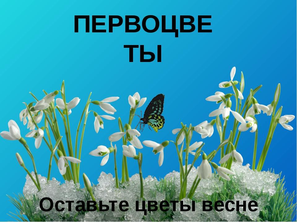 Презентация Семиной Г.А. ПЕРВОЦВЕТЫ Оставьте цветы весне