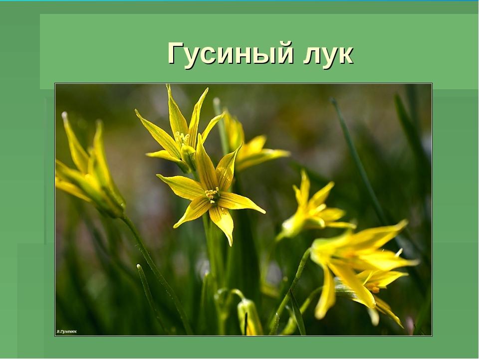 Презентация Нечаевой О.П.