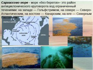 Саргассово море - море «без берегов»- это район антициклонического круговорот