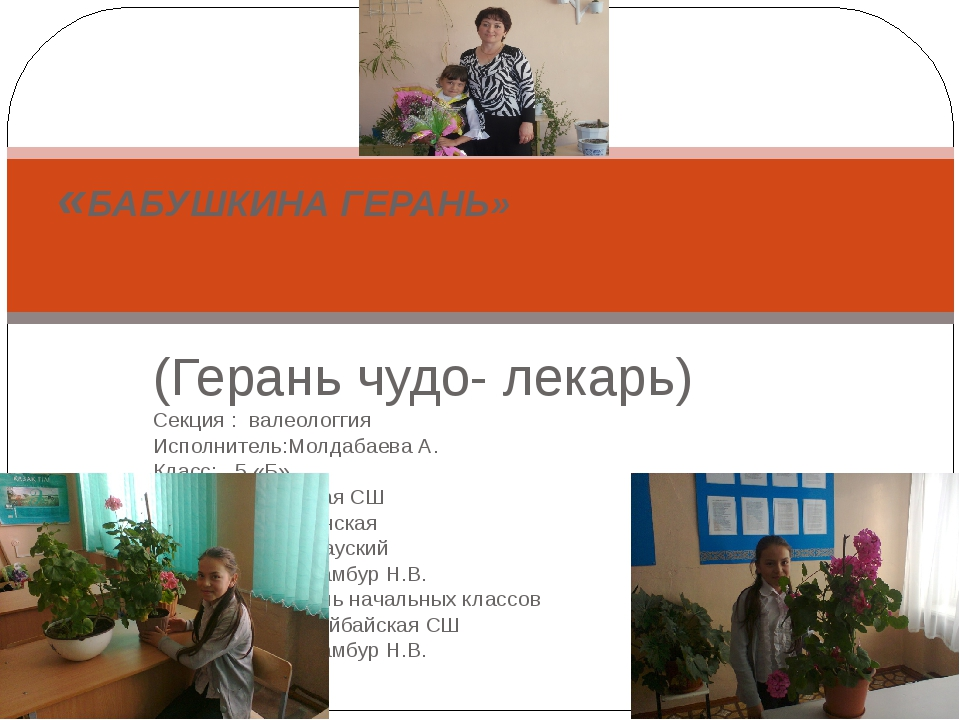 (Герань чудо- лекарь) Секция : валеологгия Исполнитель:Молдабаева А. Класс: 5...