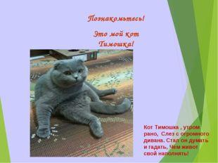 Познакомьтесь! Это мой кот Тимошка! Кот Тимошка , утром рано, Слез с огромног