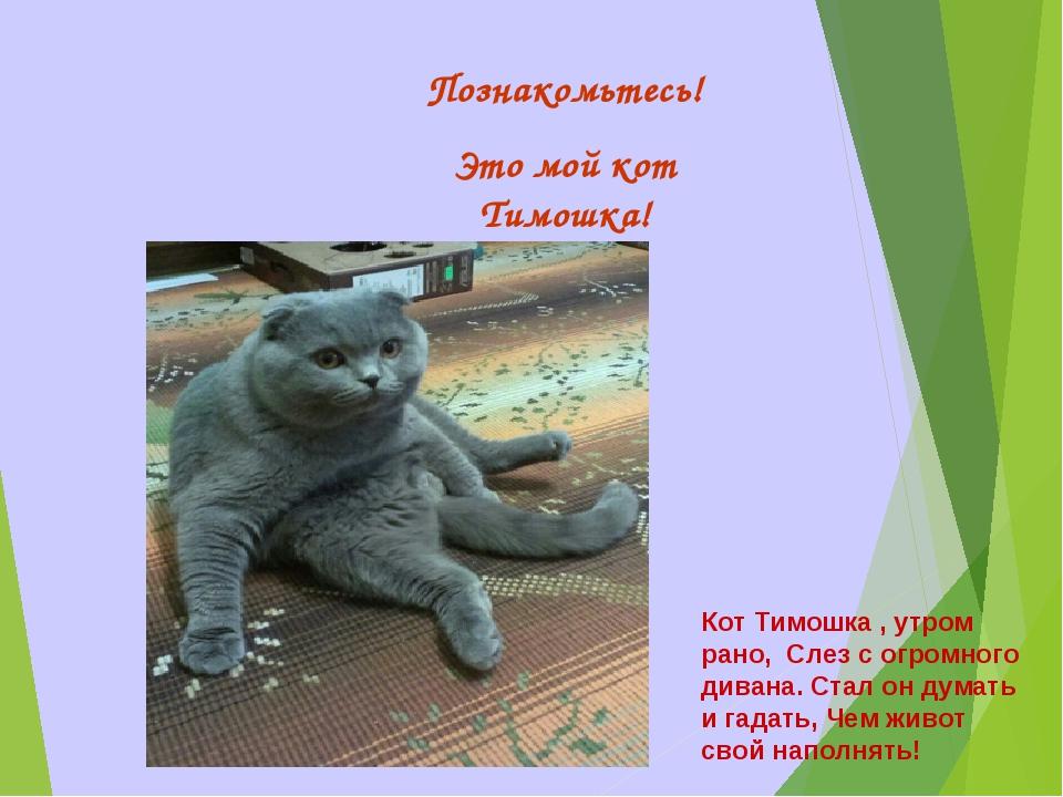 Познакомьтесь! Это мой кот Тимошка! Кот Тимошка , утром рано, Слез с огромног...