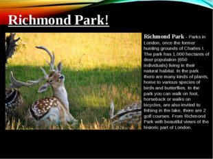 Richmond Park - Parks in London, once the former hunting grounds of Charles I