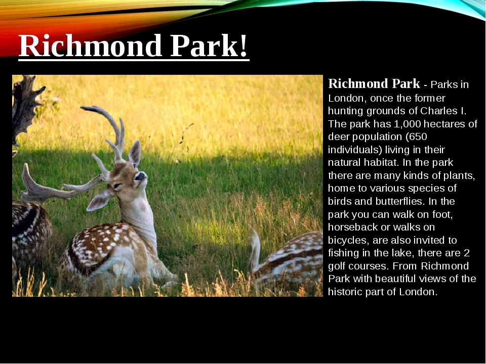 Richmond Park - Parks in London, once the former hunting grounds of Charles I...