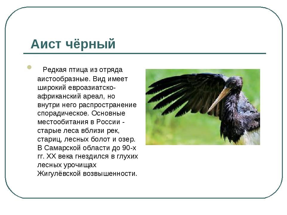 Аист чёрный Редкая птица из отряда аистообразные. Вид имеет широкий евроаз...